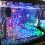 aquarium_case2